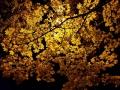 Agnese Artemjeva - Zelta nakts