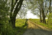 ceļš, vasara pixabay