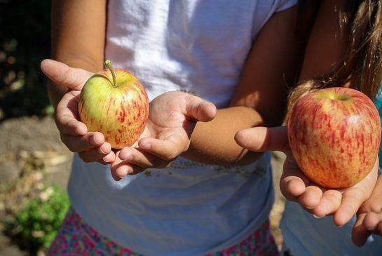 ābols pixabay